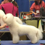 Atlanta Pet Fair 2015
