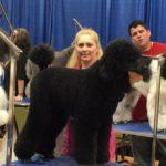 Chenal the Standard Black Poodle at Atlanta Pet Fair 2015