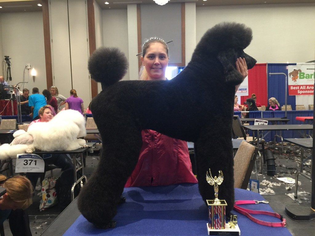 All-American Grooming Show 2015  Groom South 2015 Cris-Toy Mini Inter-3rd Place Groom South 2015 Cris-AOPB Inter-1st Place Groom South 2015 Noel-Poodles-3rd Place Groom South 2015 Noel-AOPB Entry-2nd Place Pet Pro Classic Dallas 2015 IMG_9718 IMG_9551 IMG_9439 IMG_9150 IMG_0074 Fun in the Sun Orlando Florida 2015  IMG_1010 IMG_1027 Groom Expo Grooming Show 2015 All-American Grooming Show 2015