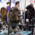 T.O. Grooming Show – June 2017