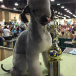 Groom Expo Grooming Show 2015 Quinn 3rd Place